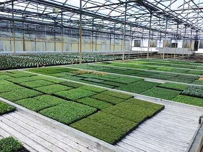 Cannabis grow warehouse